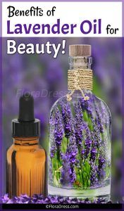 Benefits of Lavender Oil for Beauty